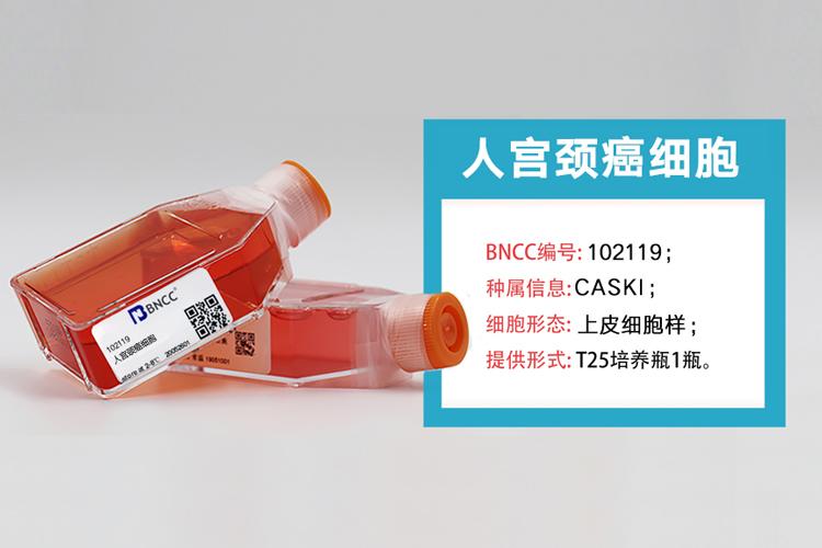 人宫颈癌细胞新品上市,欢迎选购!-www.bncc.org.cn北纳生物