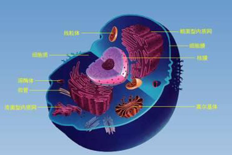 不必要的细胞组分如何移除?-www.bncc.org.cn北纳生物