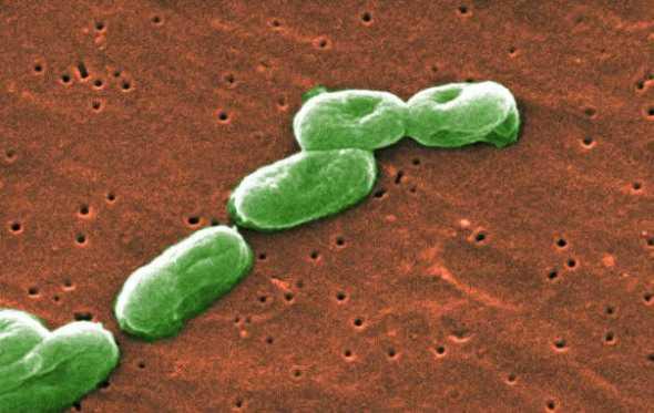 俄科学家发现可用于农作物保护的微生物新品种-www.bnbio.com北纳生物