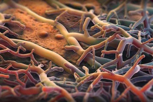 研究人员发现保存完好真菌菌丝化石的两项新研究成果-www.bncc.org.cn北纳生物