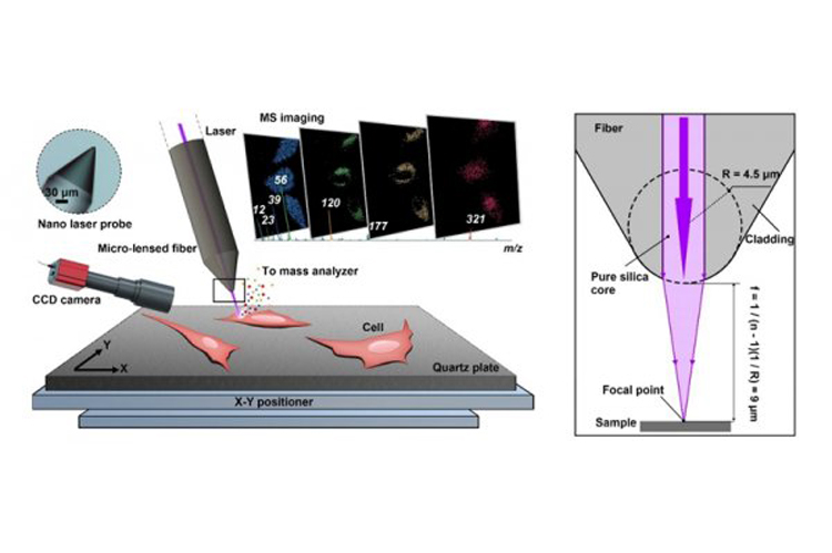 激光质谱成像研究单细胞-www.bncc.org.cn北纳生物