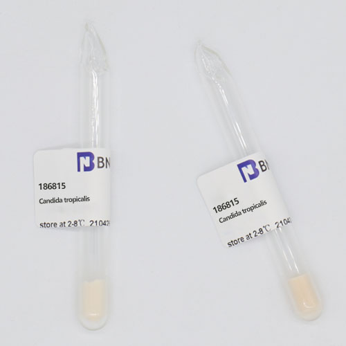 热带假丝酵母-北纳生物