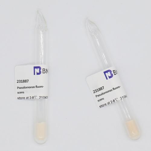 荧光假单胞菌-北纳生物