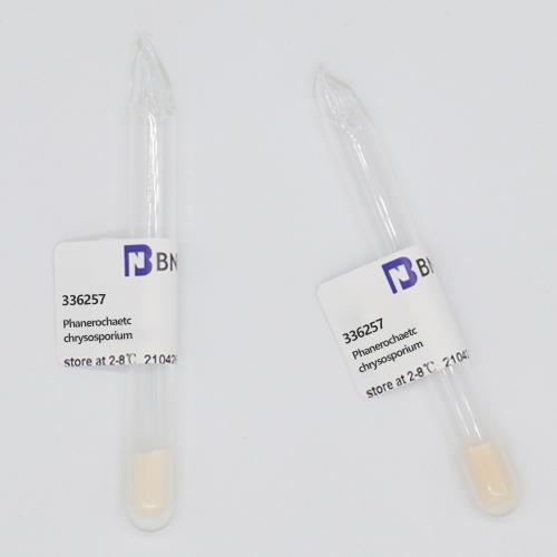 白腐菌-北纳生物