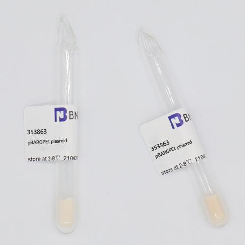 pBARGPE1-北纳生物