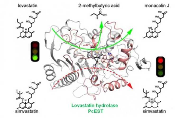 揭示洛伐他汀水解酶催化机制-www.biaowu.com北纳生物