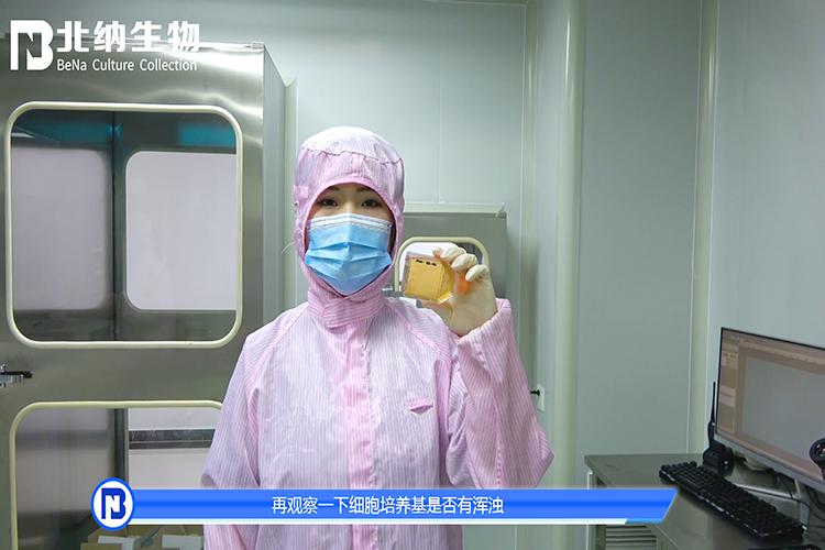 收到细胞后如发现漏液情况,该如何处理?-点播-www.bncc.org.cn北纳生物