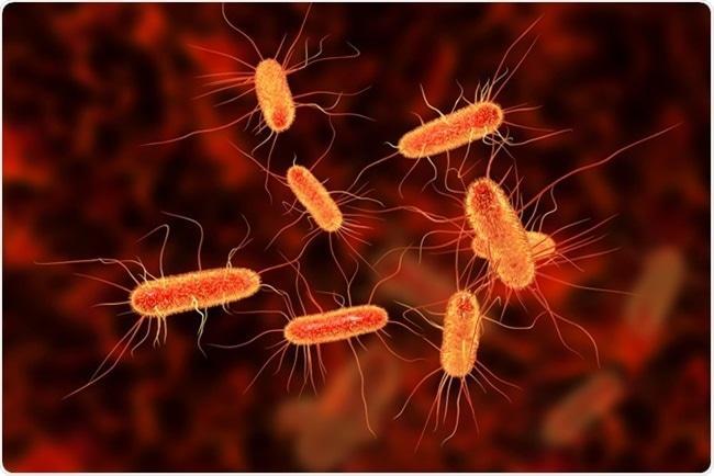 口腔与肠道微生物专题研讨会(四)-培训中心-www.bncc.org.cn北纳生物