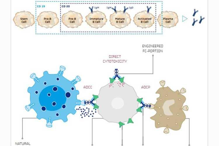 CAR-T细胞疗法杀手!-www.bnbio.com北纳生物
